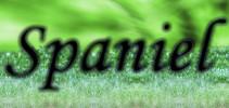 Cocker Spaniel Inglese: dedicato alla razza dei cocker spaniel inglesi