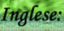 Cocker Spaniel Inglese: non siamo un allevamento di cani di questa razza